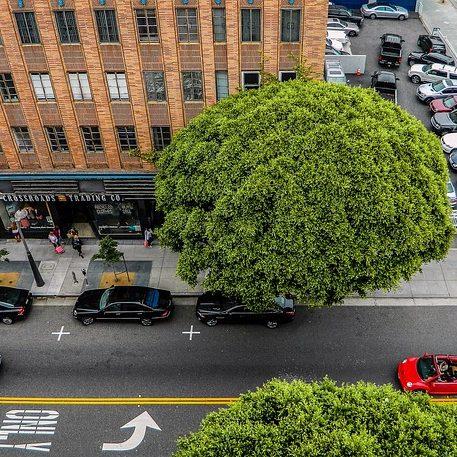 Make like a tree, and breathe